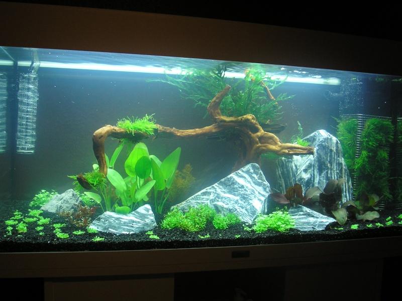 Mon Rio 180 litres, futur aquarium communautaire P1010010