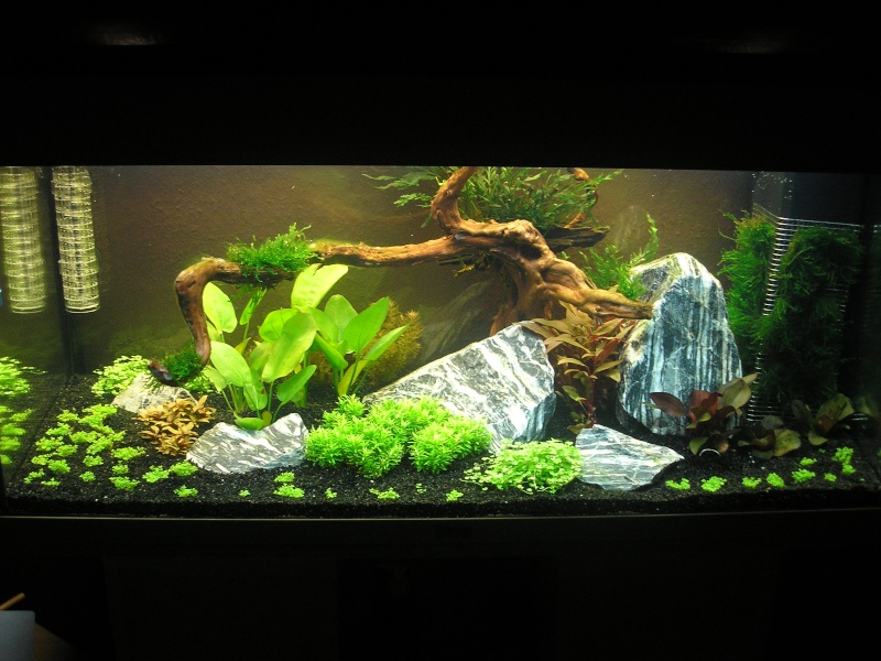 Mon Rio 180 litres, futur aquarium communautaire P1010110