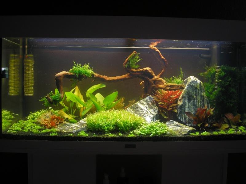 Mon Rio 180 litres, futur aquarium communautaire P1010111