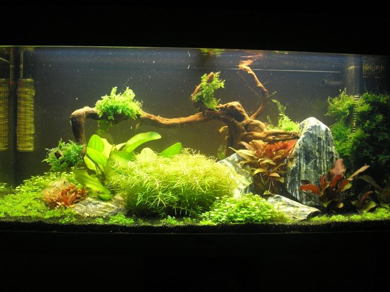 Mon Rio 180 litres, futur aquarium communautaire P1010116