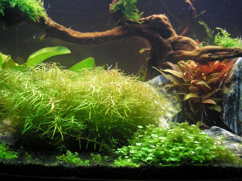 Mon Rio 180 litres, futur aquarium communautaire P1010118
