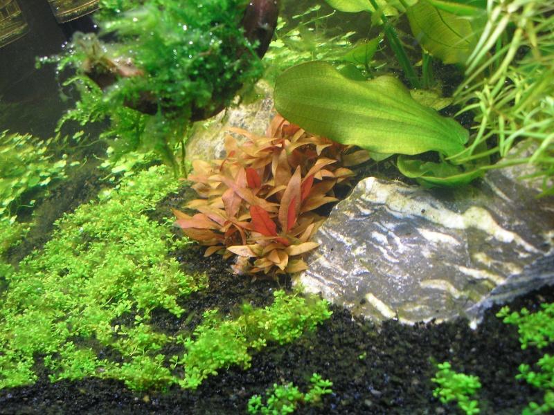 Mon Rio 180 litres, futur aquarium communautaire P1010119