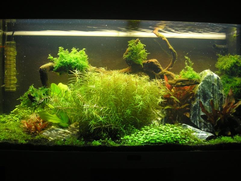 Mon Rio 180 litres, futur aquarium communautaire P1010122