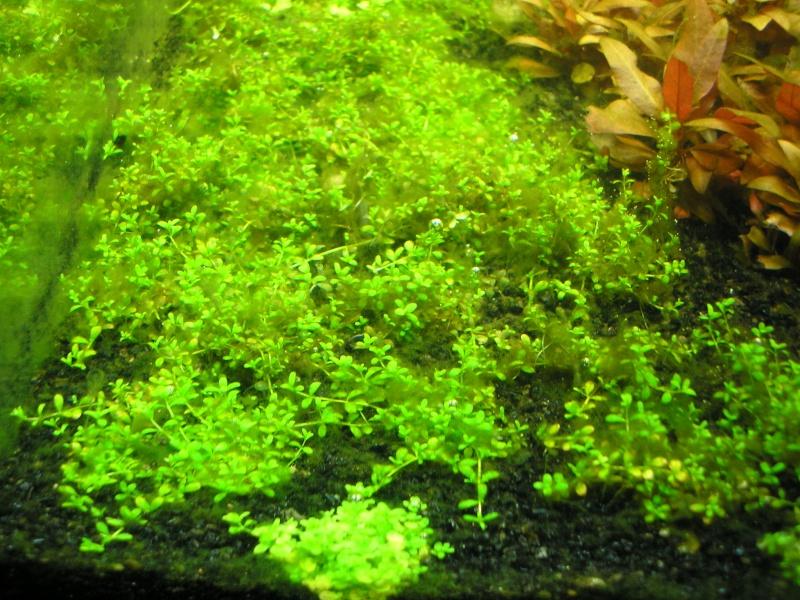 Mon Rio 180 litres, futur aquarium communautaire P1010123