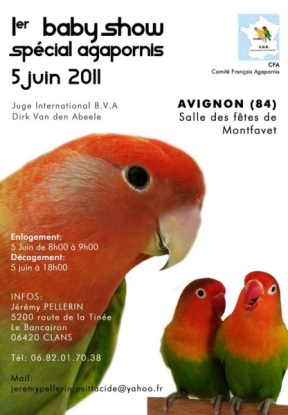 Baby show agapornis Affich11
