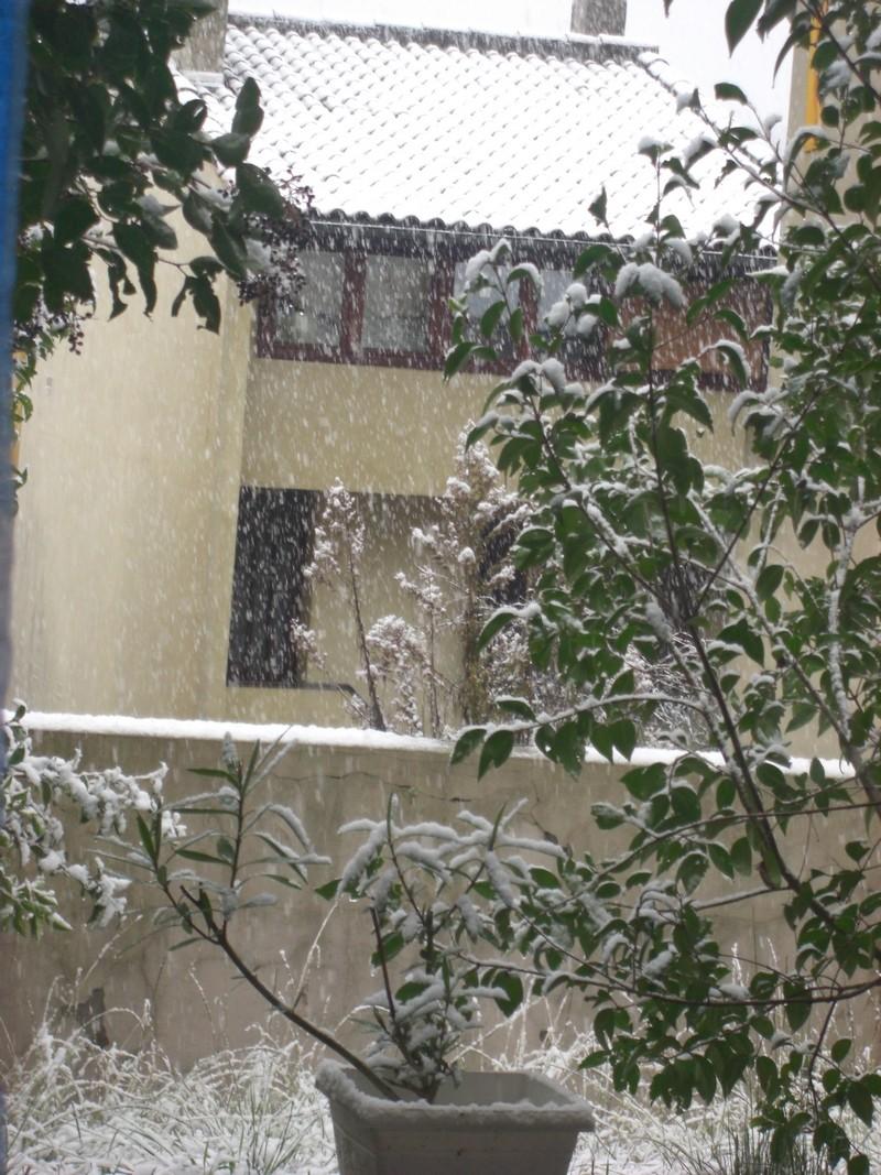Dossier sur l'épisode neigeux du 26/12/08 à Toulouse Cimg0010