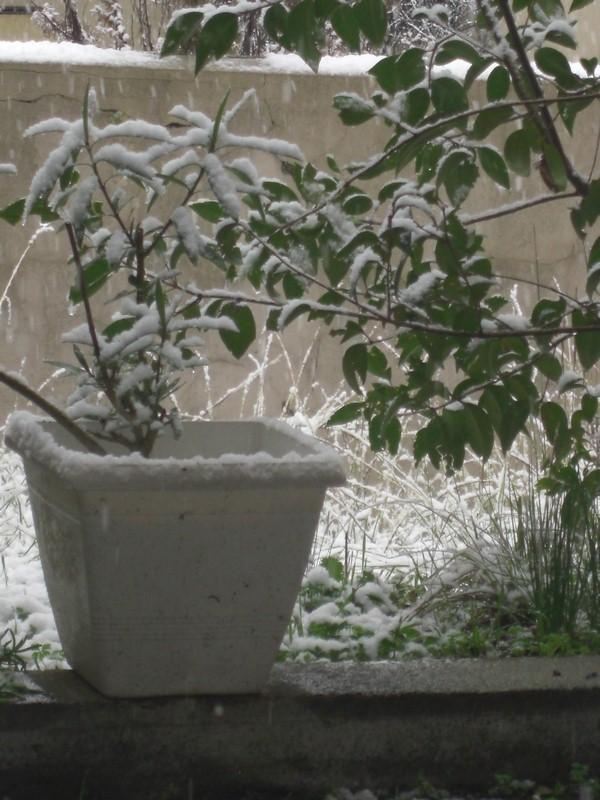 Dossier sur l'épisode neigeux du 26/12/08 à Toulouse Cimg0011