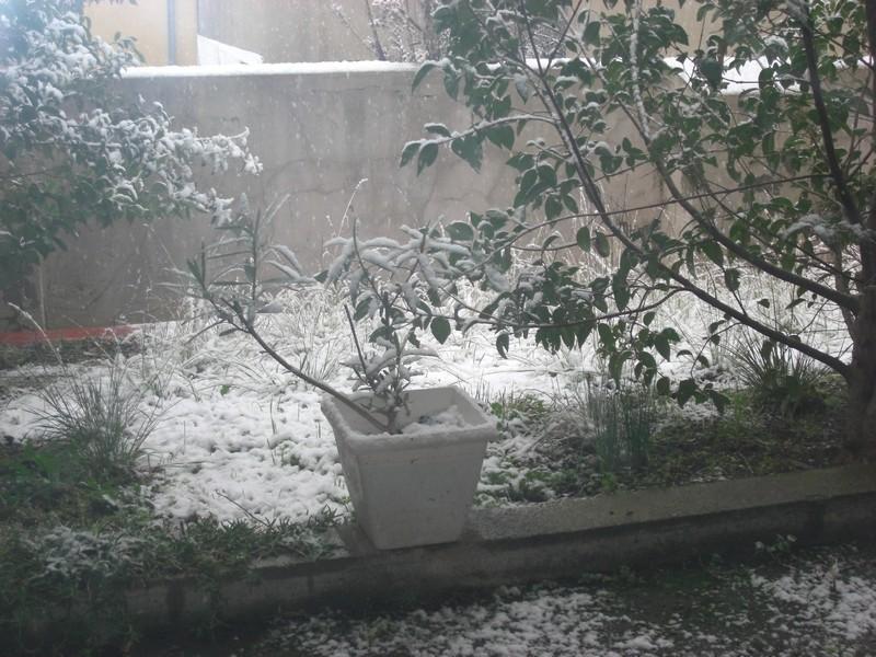 Dossier sur l'épisode neigeux du 26/12/08 à Toulouse Cimg0012