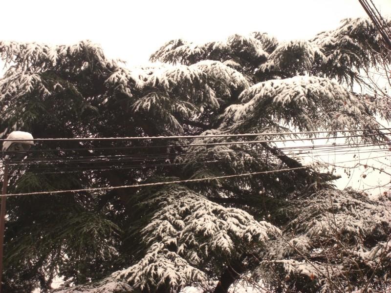 Dossier sur l'épisode neigeux du 26/12/08 à Toulouse Cimg0026