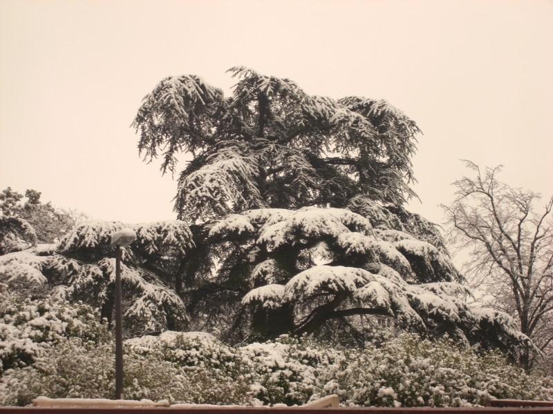 Dossier sur l'épisode neigeux du 26/12/08 à Toulouse Cimg0027