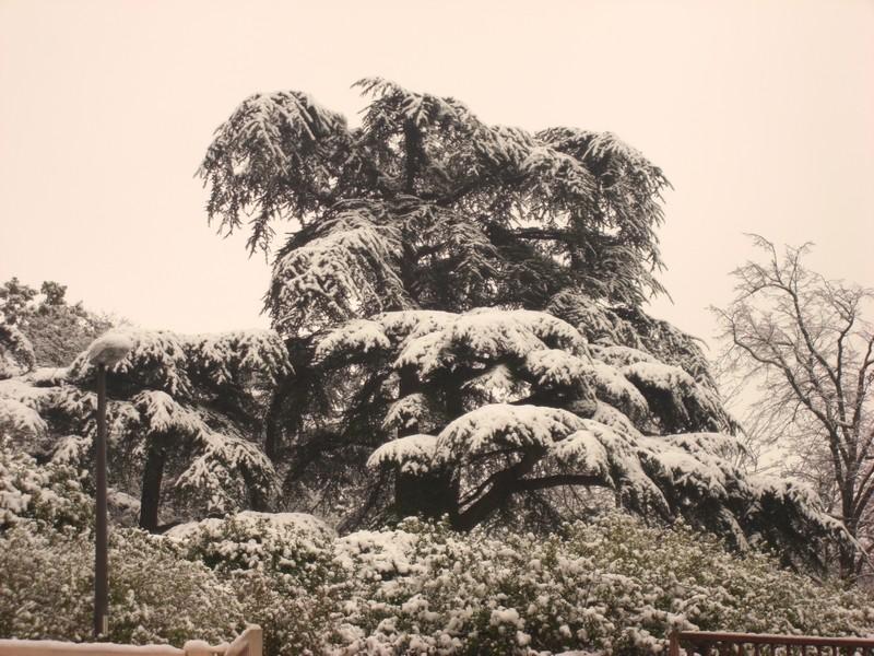 Dossier sur l'épisode neigeux du 26/12/08 à Toulouse Cimg0028
