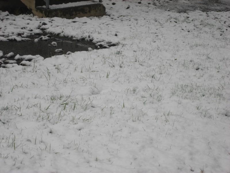 Dossier sur l'épisode neigeux du 26/12/08 à Toulouse Cimg0031