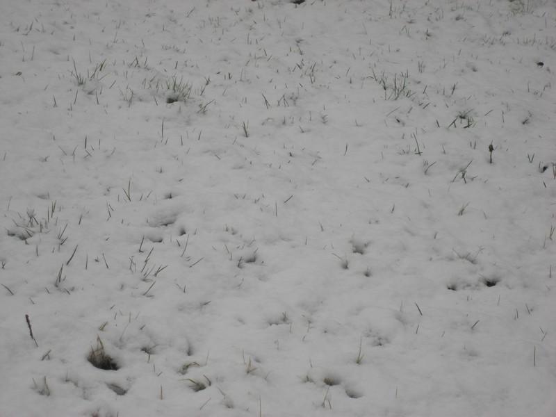 Dossier sur l'épisode neigeux du 26/12/08 à Toulouse Cimg0032