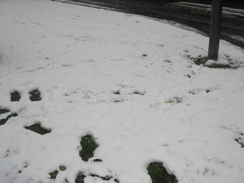 Dossier sur l'épisode neigeux du 26/12/08 à Toulouse Cimg0035