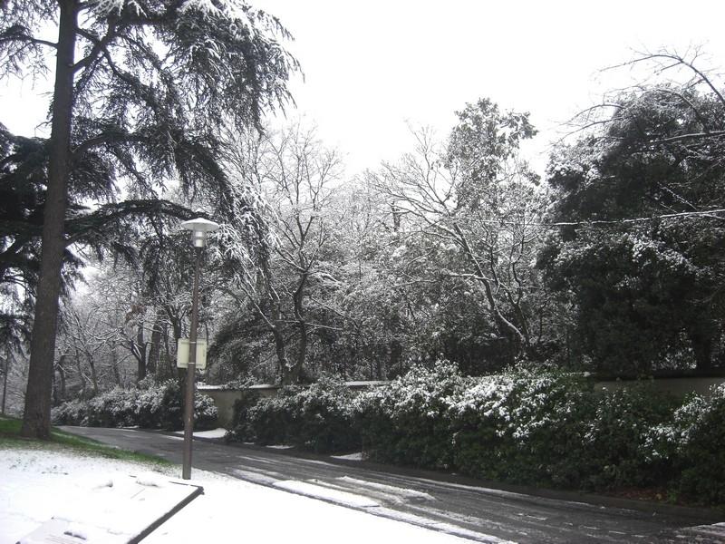 Dossier sur l'épisode neigeux du 26/12/08 à Toulouse Cimg0039