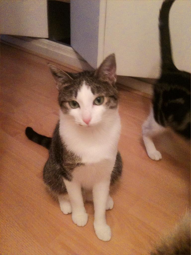 Lilas, 8 mois, et ses 5 chatons née le 29/05/2010 Iplila10