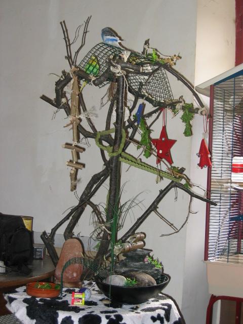 Un arbre à Perruches !!! - Page 2 Img_4624