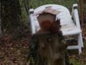 mes écureuils 511_4513