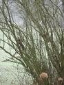 mes écureuils 511_4515