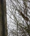 mes écureuils 511_4611