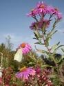 le jardin de Giroflée 2 - Page 20 Hivern49