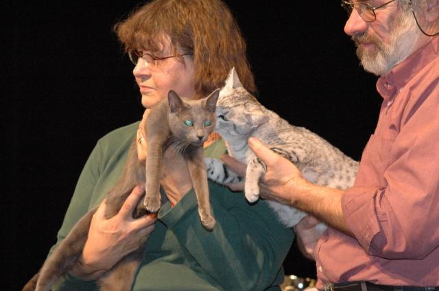 Catshow de Brie Cte Robert du 26-10-2008 Dsc_0915