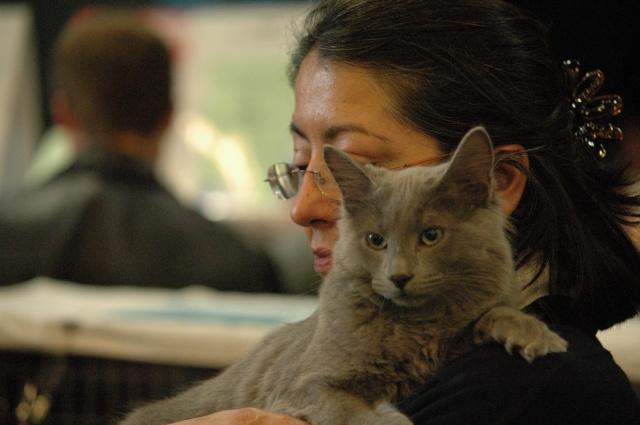 Catshow de Brie Cte Robert du 26-10-2008 Dsc_0918