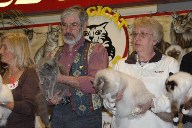 Cat Show de Gent Dsc_1610