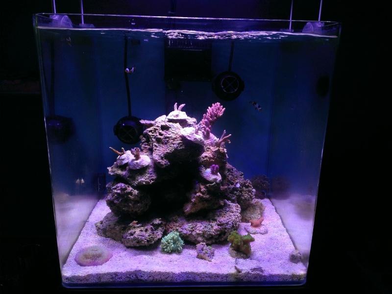 Le nouveau Blau Open Reef de Project901  Wp_20110