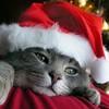 Avatars - Noël 460810