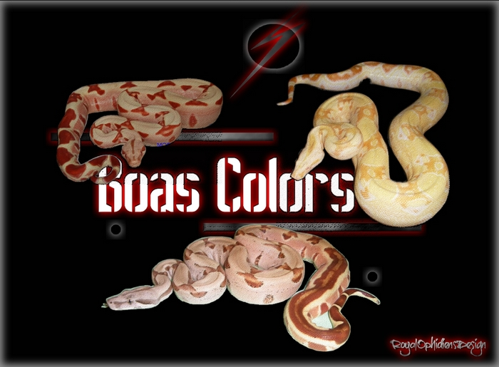 BOAS COLORS