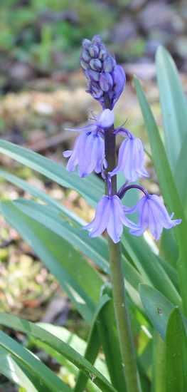 Blue..........bleu !!! - Page 15 04042011