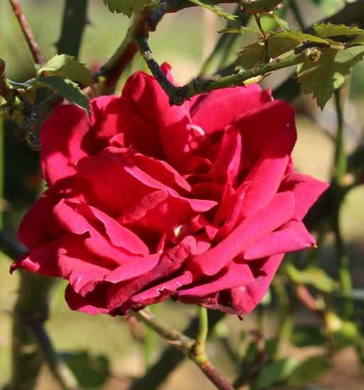 'Red Parfum' !!! - Page 2 04042016