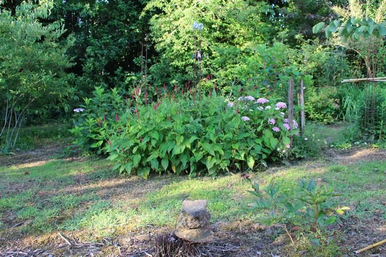 Persicaria amplexicaulis atrosanguinea !!!  - Page 2 21062035
