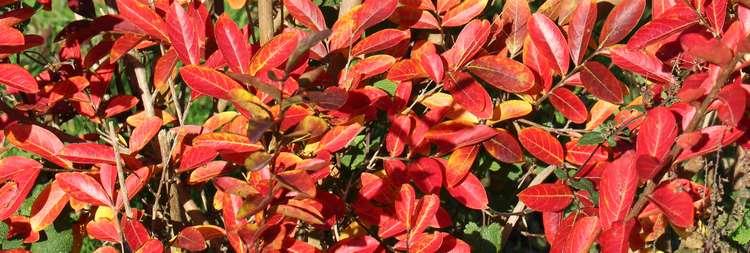 Couleurs d'automne !!! 21102025