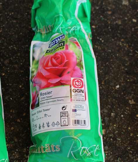 Rosa 'Eiffel Tower' ! 22022014