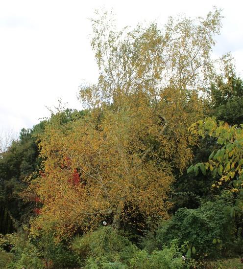 Couleurs d'automne !!! 22102017