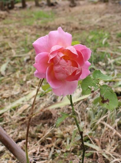 rosier tiffany - Page 3 23052021