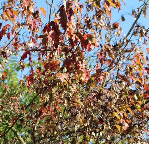 Couleurs d'automne ! 23102017