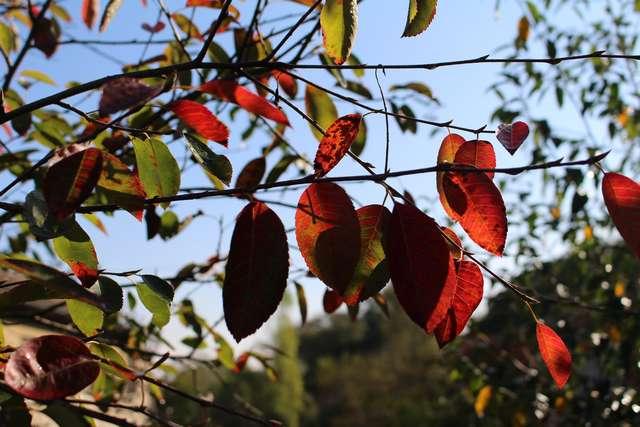 Couleurs d'automne ! 23102021