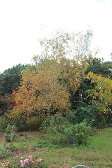 Couleurs d'automne !!! 23102028