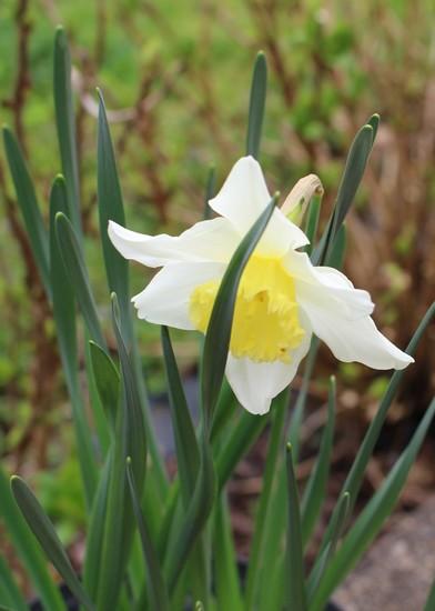 Annonce de printemps !!! Img_3218