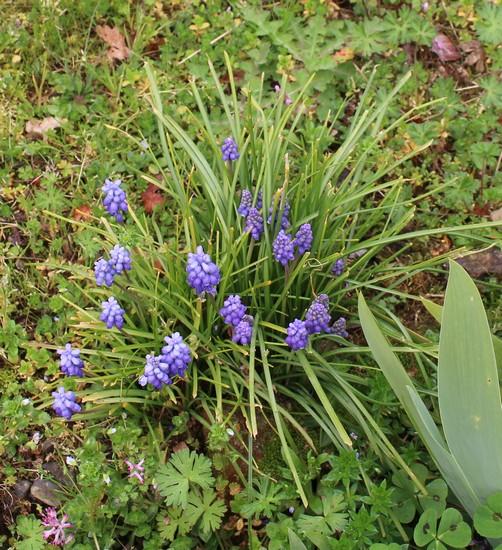 Annonce de printemps !!! Img_3220