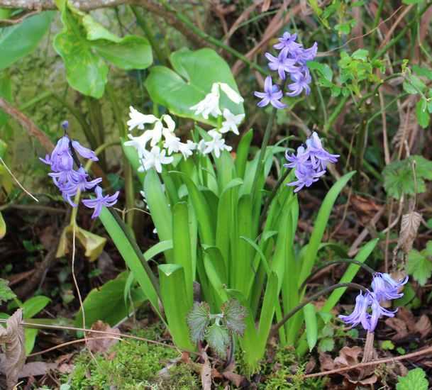 Annonce de printemps !!! Img_3230