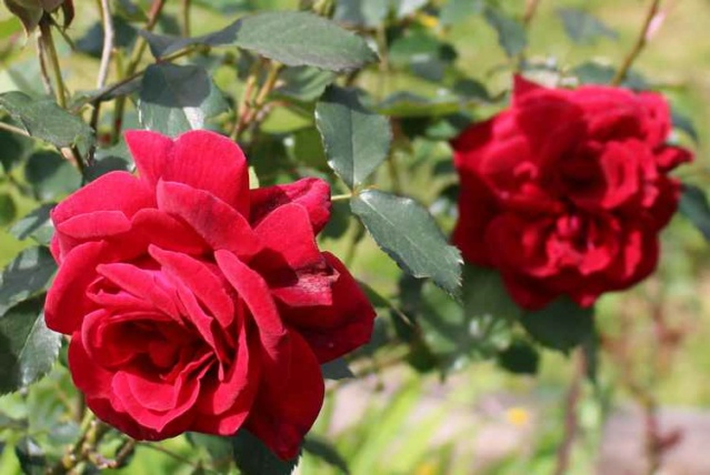 'Red Parfum' !!! - Page 3 Img_4122
