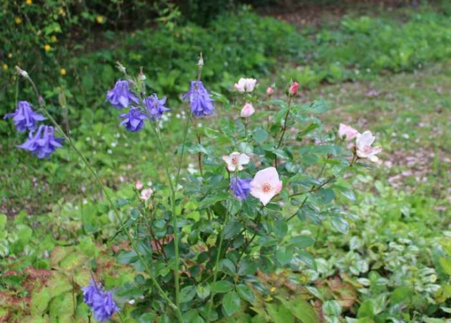 Rosa 'Astronomia' !!! - Page 8 Img_4618