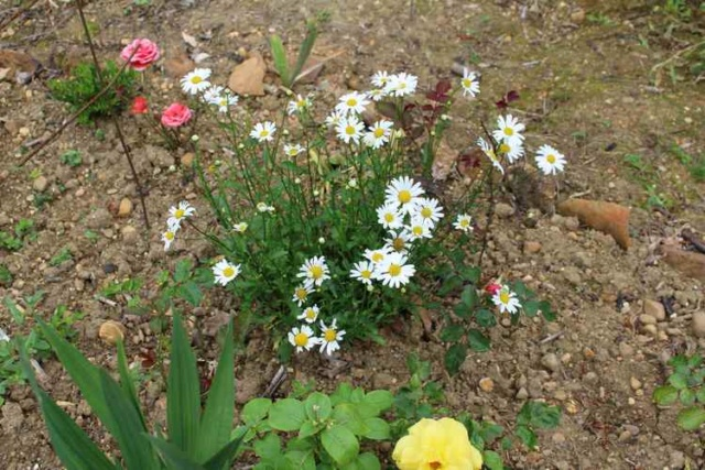 aster Img_5520