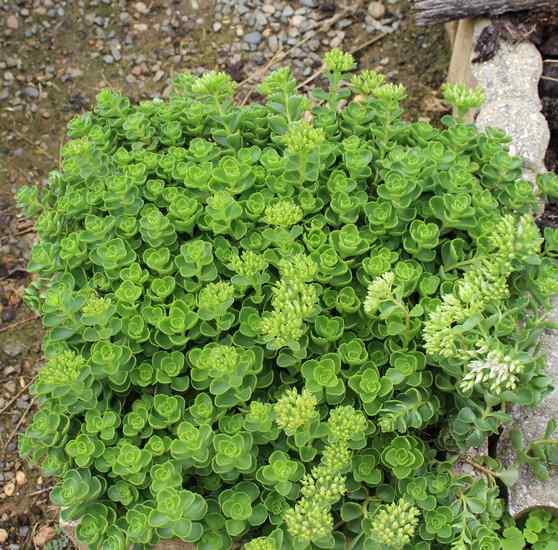Plante grasse, succulente !!! Img_6225