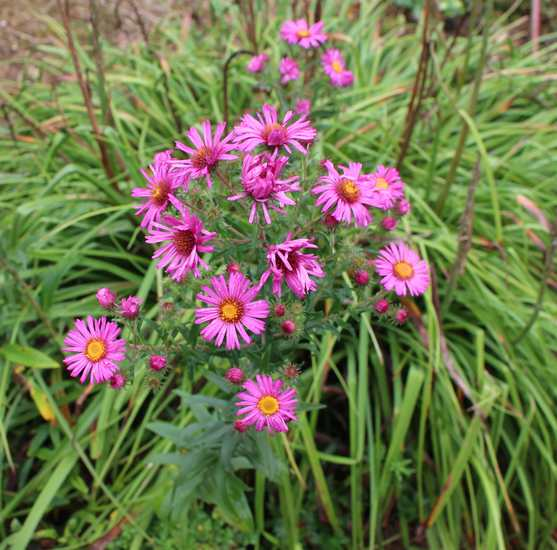 aster Img_6922