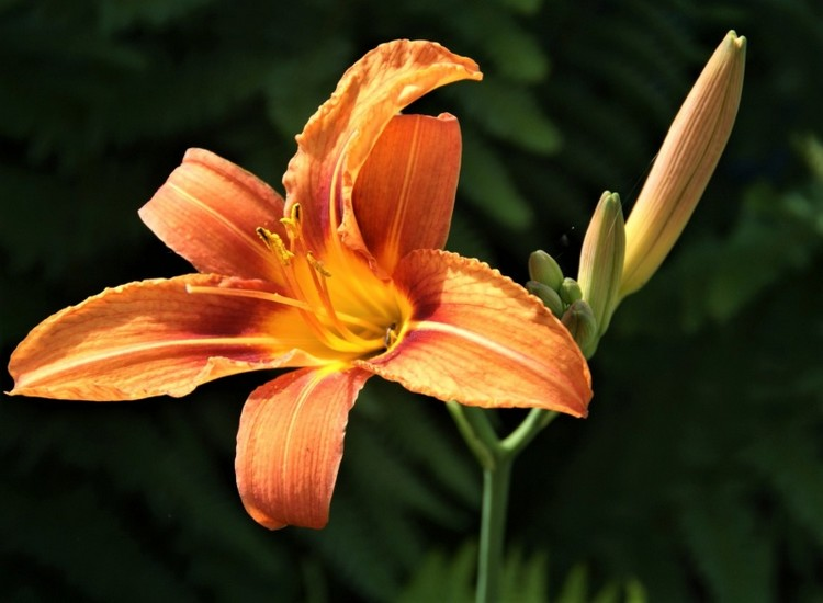 Hemerocallis - 2020 ! - Page 2 Mar10